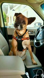Dog Transportation Royalpaws